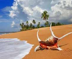 Honeymoon Tour To Sri Lanka